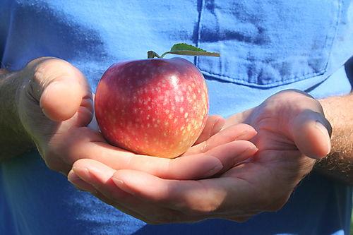 Peaches 032